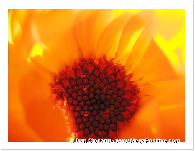calendula flower super macro photo abstract art high positive energy